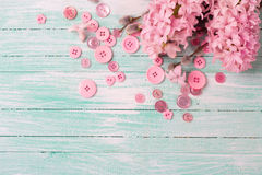 Hyacinths and willow flowers and pink buttons  on turquoise pain Royalty Free Stock Images
