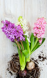 Hyacinths on wooden surface Royalty Free Stock Photos