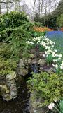 Hyacinthus και Muscari botryoides σε έναν ιαπωνικό καταρράκτη Στοκ φωτογραφίες με δικαίωμα ελεύθερης χρήσης