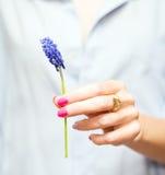 Hyacinthus Stock Photo