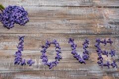 Hyacinthus pourpre de floraison Fond de fleur Le printemps… a monté des feuilles, fond naturel Photos stock