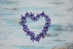 Hyacinthus pourpre de floraison Fond de fleur Le printemps… a monté des feuilles, fond naturel Photographie stock libre de droits