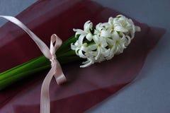 Hyacintsamenstelling stock afbeeldingen