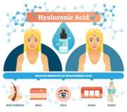 Hyaluronic όξινη διανυσματική απεικόνιση Αντι οφέλη για την υγεία κυττάρων γήρανσης ελεύθερη απεικόνιση δικαιώματος
