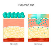 Hyaluronic acid. Hyaluronic acid in skin-care products. Low molecular and High molecular. Difference Stock Photo