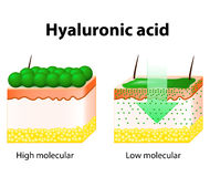 Hyaluronic acid Stock Images