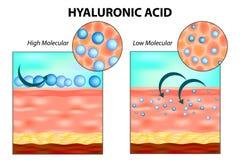 Hyalurowy kwas w skórze ilustracji