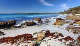 Hyams plaża, Jervis zatoka Australia zdjęcia royalty free