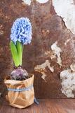 Frühlingsstimmung Stockfoto