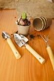 Hyazinthenbirne mit einem Sprössling und Gartenwerkzeugen Lizenzfreie Stockfotografie