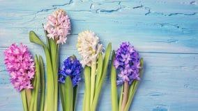 Hyazinthenblumen Stockfotografie