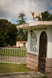 Hybrid dog on the top of a house Stock Photo