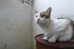 Hybrid- katt Fotografering för Bildbyråer