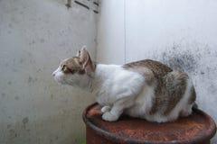 Hybrid- katt Royaltyfri Bild