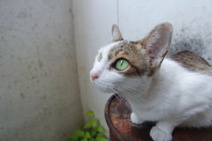 Hybrid- katt Arkivfoton