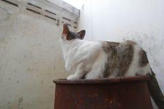 Hybrid- katt Arkivfoto