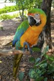 Hybrid Macaw Full Length Stock Images