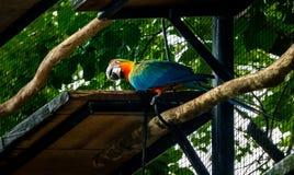 Hybrid Macaw at Parque das Aves - Foz do Iguacu, Parana, Brazil. Hybrid Macaw at Parque das Aves in Foz do Iguacu, Parana, Brazil royalty free stock photo