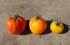 Hybrid tomato Stock Photos