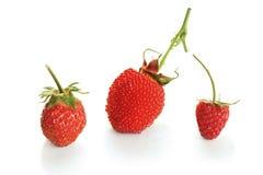 . Hybride Himbeeren der Beere mit Erdbeeren auf Weiß Stockbilder