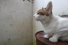 Hybride Katze stockfotos