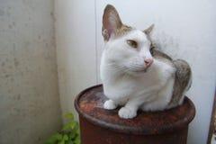 Hybride Katze Stockbild