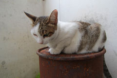 Hybride Katze Stockfoto