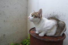 Hybride Katze Lizenzfreies Stockfoto