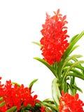 Hybrydowe orchidee Zdjęcia Royalty Free