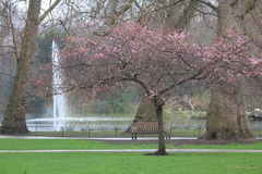 Hyde Parc in London city Royalty Free Stock Images