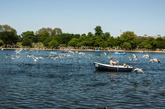 Hyde Park. In a warm sunny day Royalty Free Stock Photos