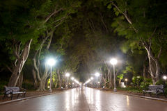 Hyde Park. This image shows the pathway through Hyde Park, Sydney, Australia Royalty Free Stock Photography