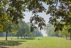 Hyde Park - Farben von London im Herbst - Leute, die auf dem Gras kühlen lizenzfreie stockbilder