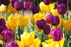 Hyde Park Flowers royaltyfri foto