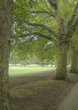 Hyde Park. Grass and trees in Hyde Park, London, UK royalty free stock images