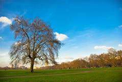 Hyde Park, Großbritannien. Stockbilder