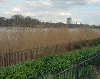 Hyde Park. London beyond the park Royalty Free Stock Photo