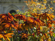 The Hyde Park, London - bright colorful flowers. Stock Photography