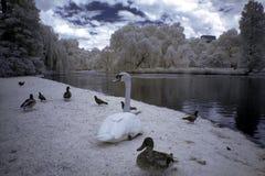 Hyde Park, London, England Stock Image