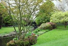 Hyde Park London, vattenfall i vårblomning Royaltyfri Bild