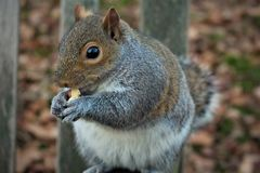 Hyde Park. Look on the squirrel in the Hyde Park, London Stock Images
