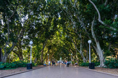 Hyde park north alley Royalty Free Stock Image