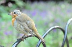 Hyde Park, pássaro, Londres Foto de Stock