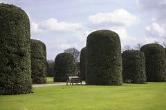 Hyde Park pollardtrees Royaltyfri Foto
