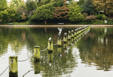 Hyde Park. Serpentine Lake in Hyde Park Royalty Free Stock Photography