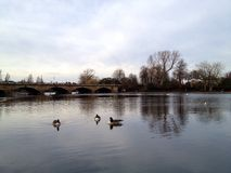 Hyde Park Serpentine. London Stock Photography