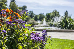 Hyde Park on a sunny day, Lodnon. This image shows some flowers in Hyde Park, London. It was taken on a sunny day in August 2017 Royalty Free Stock Images
