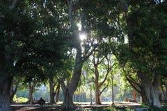 Hyde Park Sydney Imagens de Stock