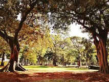 Hyde Park, Sydney. The beautiful Hyde Park view, Sydney Australia Royalty Free Stock Photos