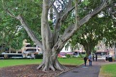 Hyde Park, Sydney Stock Photos